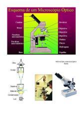 Imagens de microscópio e suas partes.doc